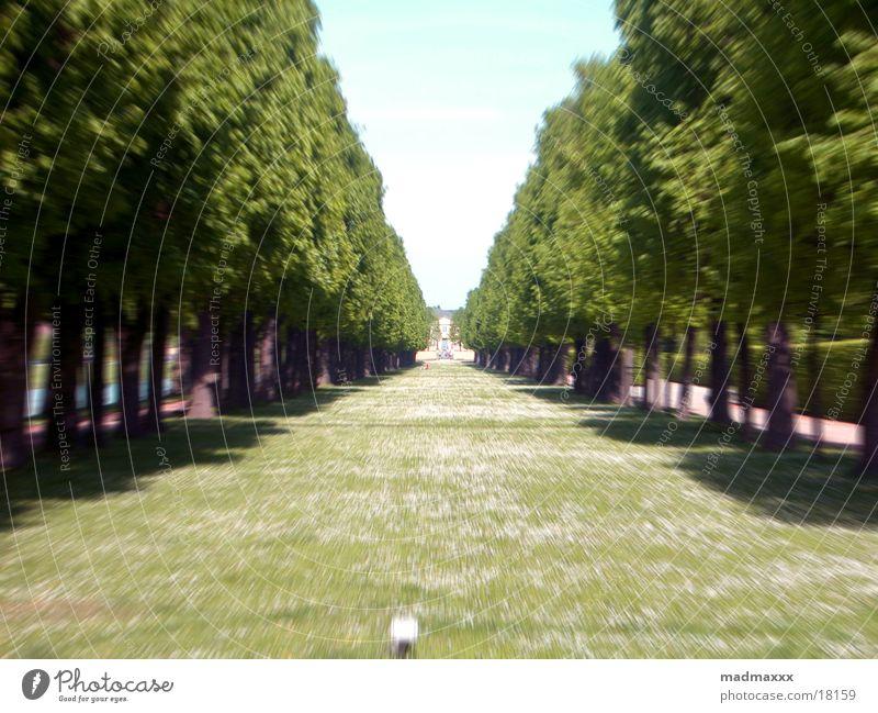 langer Weg grün Wege & Pfade Hannover Herrenhausen-Stöcken