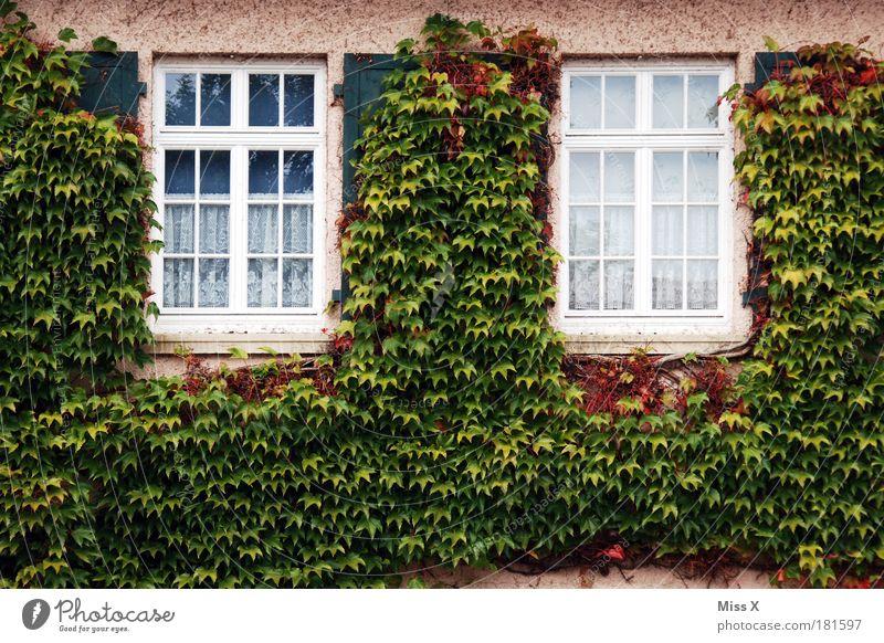 Bewuchert Natur alt Pflanze Sommer Blatt Haus Herbst kalt Fenster Wand Garten Gebäude Mauer Park Fassade wild