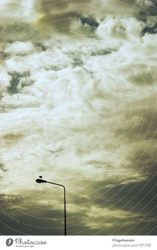 0:1 für Deutschland - Fast leergefegte Straßen(lampen) Natur Himmel Wolken Einsamkeit Freiheit Vogel warten Umwelt fliegen Verkehr einfach Freizeit & Hobby