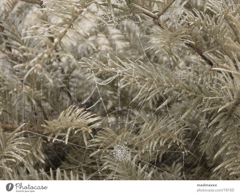 Spiders work Spinne Spinnennetz Netz Makroaufnahme