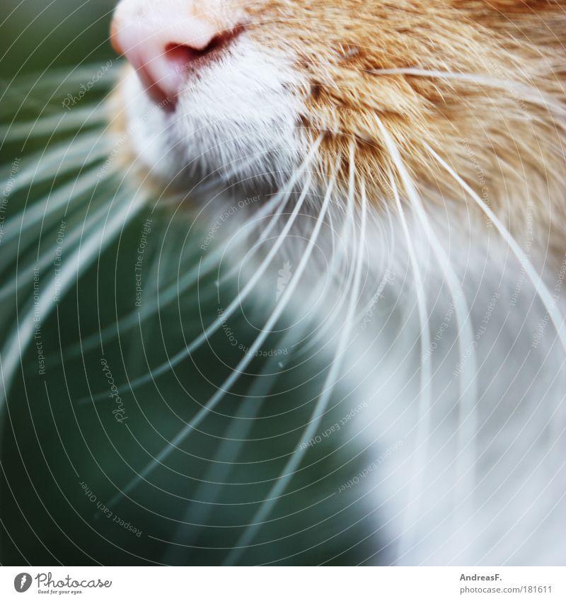 Bartträger Natur Tier Katze Fell berühren Geruch Haustier kuschlig Sinn Schnurrhaar Barthaare Schnurren Tastsinn Schnurrbarthaare