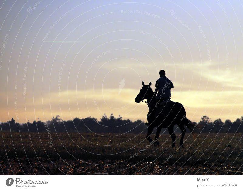 Reiter Mensch Himmel Tier Ferne Freiheit Glück Kraft maskulin frei Pferd Fröhlichkeit Freizeit & Hobby Schönes Wetter Natur Ausdauer Reiten