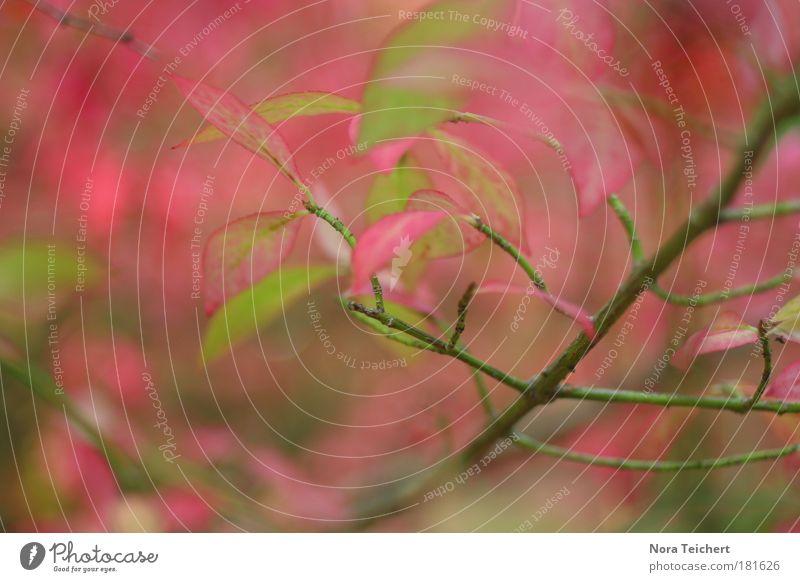 Ottobre Farbfoto Gedeckte Farben mehrfarbig Außenaufnahme Nahaufnahme Detailaufnahme Makroaufnahme Experiment abstrakt Menschenleer Abend Lichterscheinung