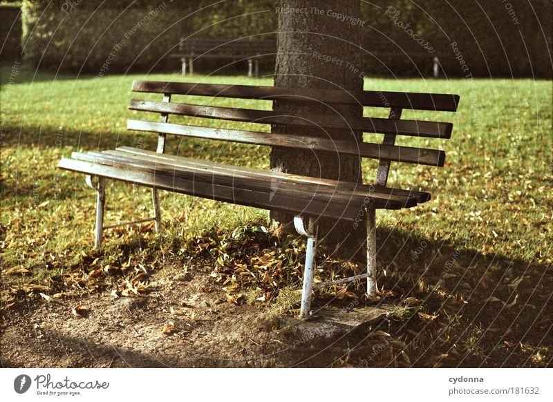 Für eine Weile Natur schön Baum ruhig Leben Erholung Herbst Wiese Garten träumen Traurigkeit Park Wärme Zufriedenheit Wind Umwelt