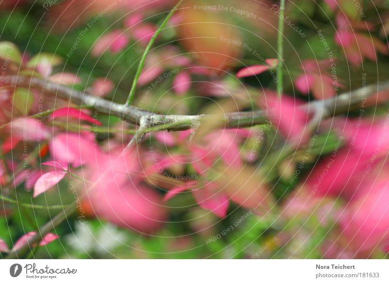 Octubre Farbfoto Gedeckte Farben mehrfarbig Außenaufnahme Nahaufnahme Detailaufnahme Experiment abstrakt Menschenleer Abend Lichterscheinung Unschärfe