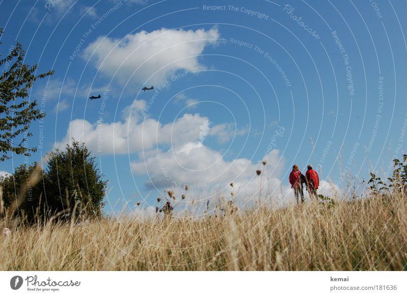 Flugschau Ausflug Natur Landschaft Pflanze Himmel Wolken Sommer Schönes Wetter Gras Sträucher Luftverkehr Flugzeug Propellerflugzeug beobachten fliegen Blick