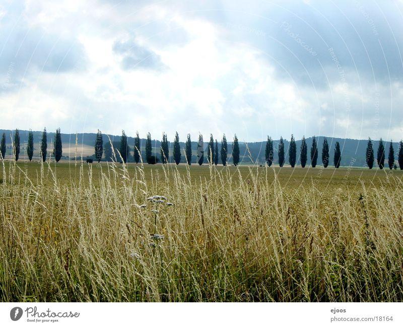 Weizenfeld Natur Baum Landschaft Feld groß Weizen Getreide