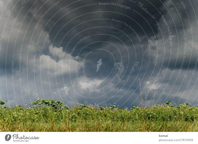 Zusammengebraut Abenteuer Umwelt Natur Landschaft Urelemente Himmel Wolken Gewitterwolken Herbst Wetter schlechtes Wetter Unwetter Sturm Pflanze Grünpflanze