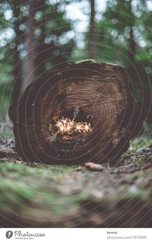 Gelichter Natur Pflanze Weihnachten & Advent grün Baum Winter dunkel Wald Umwelt Wärme Herbst außergewöhnlich braun leuchten Dekoration & Verzierung Baumstamm