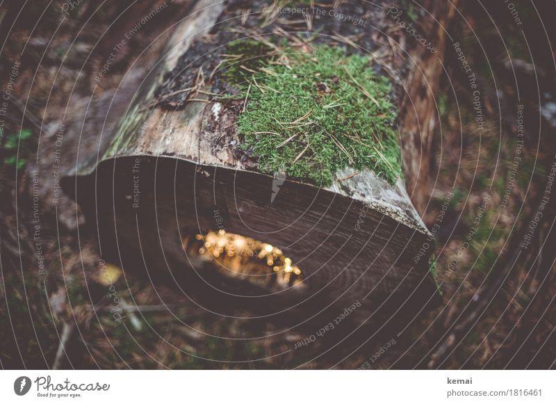 Waldwohnung harmonisch Wohlgefühl Zufriedenheit Erholung ruhig Weihnachten & Advent Umwelt Natur Pflanze Herbst Winter Baum Moos Wildpflanze Totholz Baumstamm