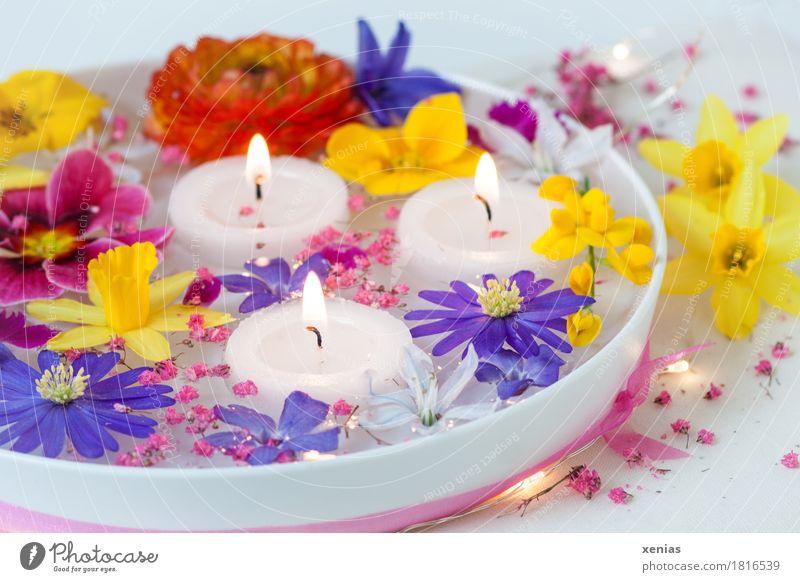 Frühlingsblumen in Wasserschale weiß Blume gelb Blüte Feste & Feiern rosa Häusliches Leben 3 Ostern Kerze violett Wellness Duft Schalen & Schüsseln Flamme