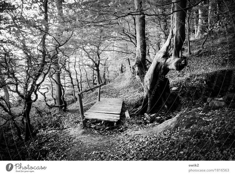 Eingebettet Umwelt Natur Landschaft Pflanze Herbst Klima Schönes Wetter Baum Ast Zweige u. Äste Wald Holz einfach Verantwortung achtsam gewissenhaft bescheiden