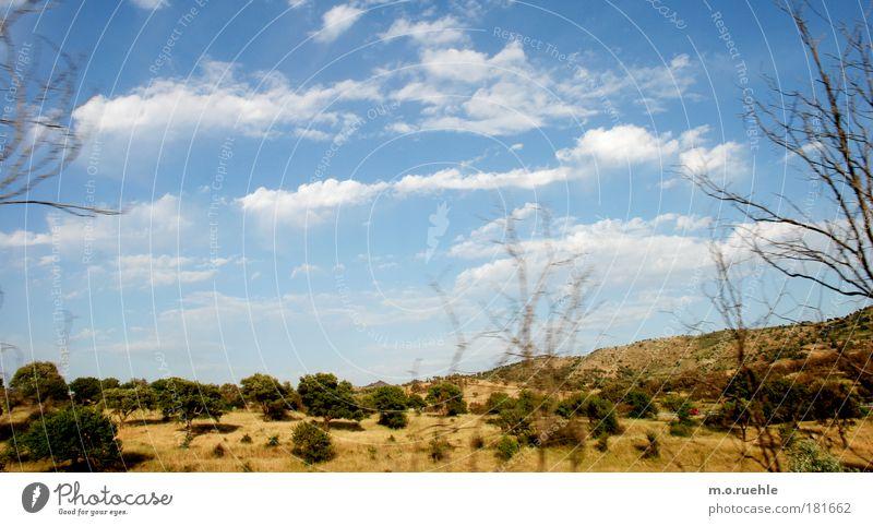 sardische*schimmer Himmel Natur blau schön Baum Pflanze Wolken ruhig Umwelt Landschaft gelb Wiese Gras Feld Reisefotografie natürlich