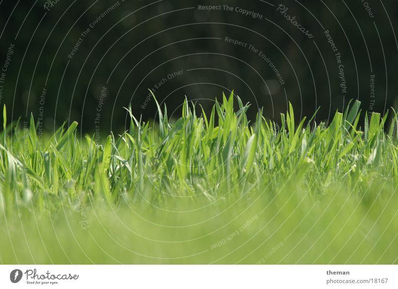 Es grünt so grün... Gras Halm Rasen Garten Kontrast