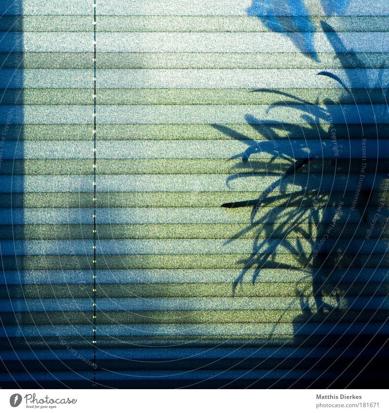 Zimmerpflanze und Window Color Farbfoto Innenaufnahme Menschenleer Textfreiraum links Morgen Tag Licht Schatten Kontrast Silhouette Gegenlicht
