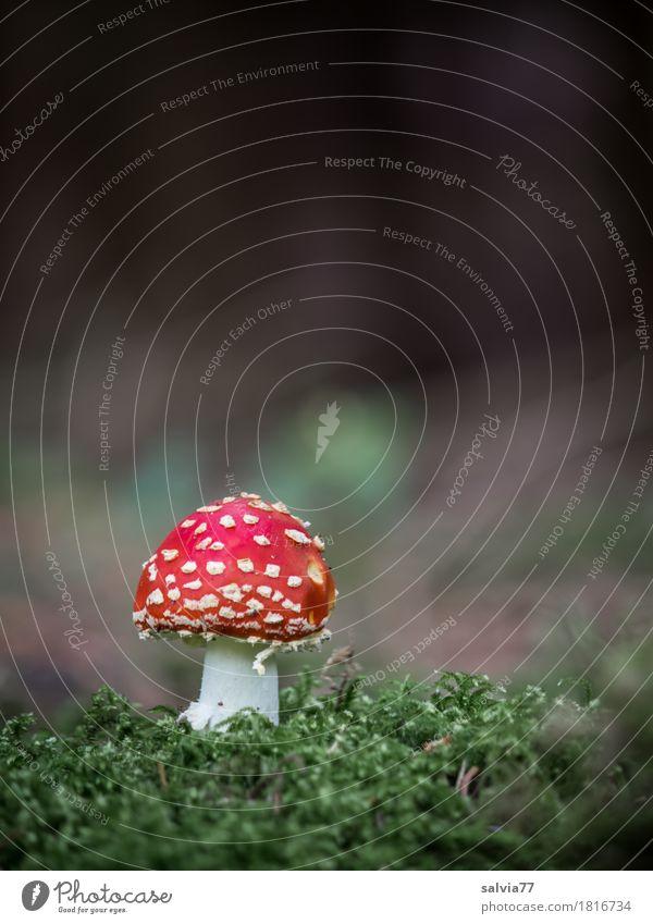 Solist Natur Pflanze Farbe grün schön rot Einsamkeit Tier ruhig Wald Umwelt Herbst Glück Stimmung leuchten Erde