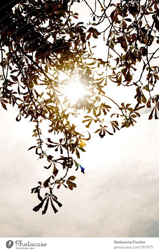 Lichtblick Natur Himmel Sonnenlicht Herbst Blatt braun grün weiß Blätterdach Sonnentag Lichtspiel Lichteinfall Ast Wärme Hoffnung Farbfoto Außenaufnahme