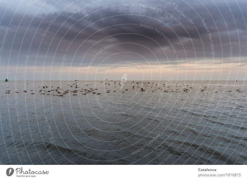 Debattierclub auf offener See Freiheit Sommer Meer Umwelt Tier Luft Wasser Wolken Horizont Nordsee Wildtier Vogel Möwenschwarm Schwimmen & Baden glänzend