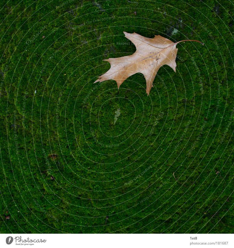 es wird herbst... Natur grün Pflanze ruhig Blatt Herbst Wand Mauer braun Umwelt Erde trocken Moos Vorsicht Friedhof geduldig