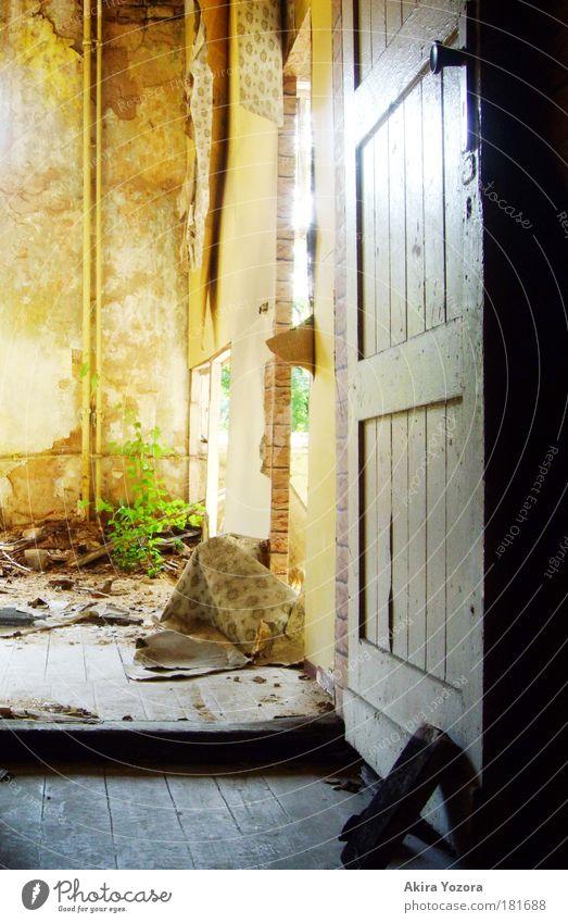 Verborgene Schätze Natur alt weiß Baum grün Pflanze gelb hell Raum dreckig Tür Wachstum Häusliches Leben einzigartig natürlich außergewöhnlich