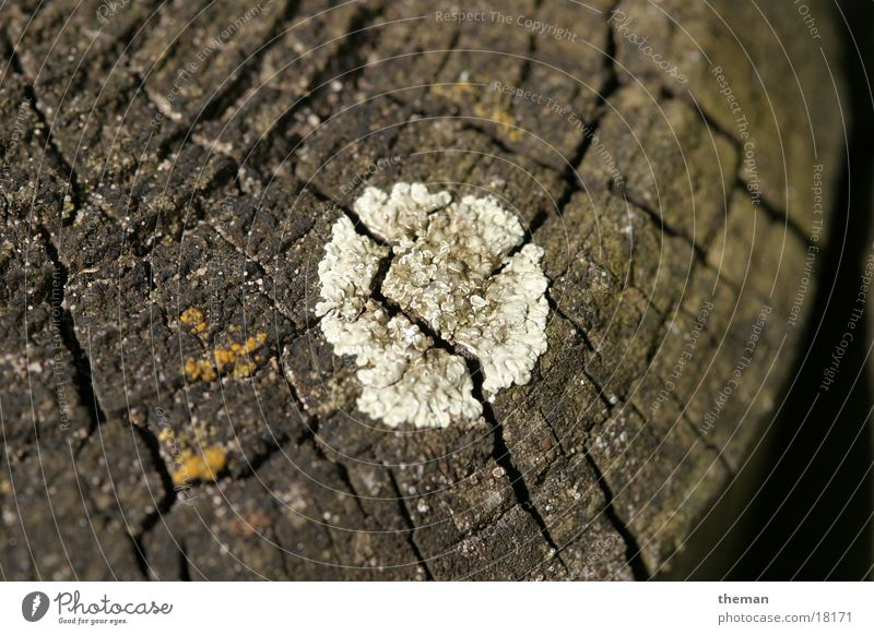 Verderb Holz Palisade Pilz