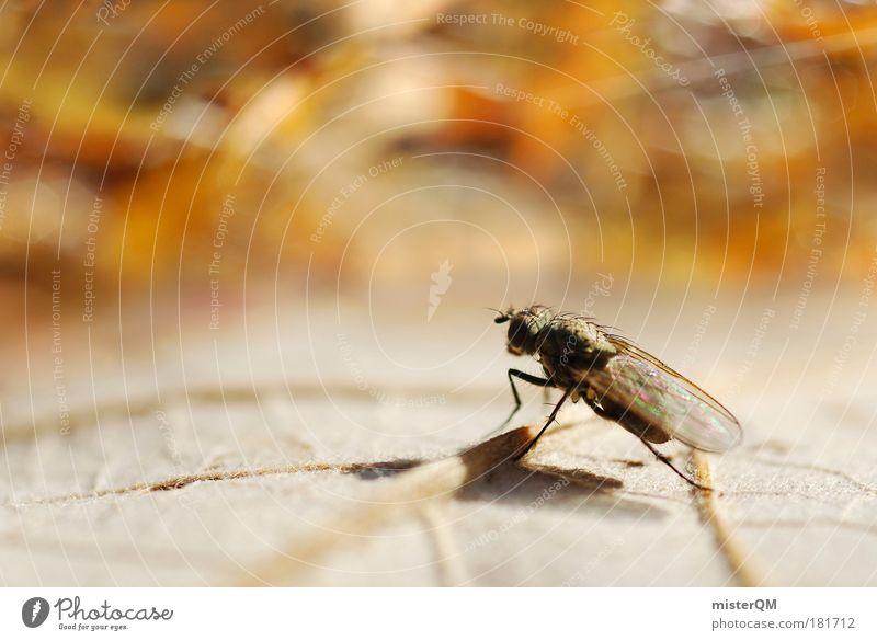Steven Fly Goes Public. Natur Blatt Einsamkeit Tod Herbst Traurigkeit Zufriedenheit fliegen Fliege Armut Pause Aussicht Insekt skurril Herbstlaub Surrealismus
