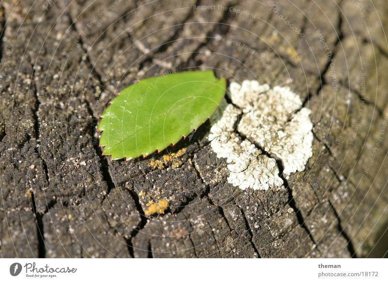 Gedeih und Verderb Blatt Holz Pilz Rosenblätter