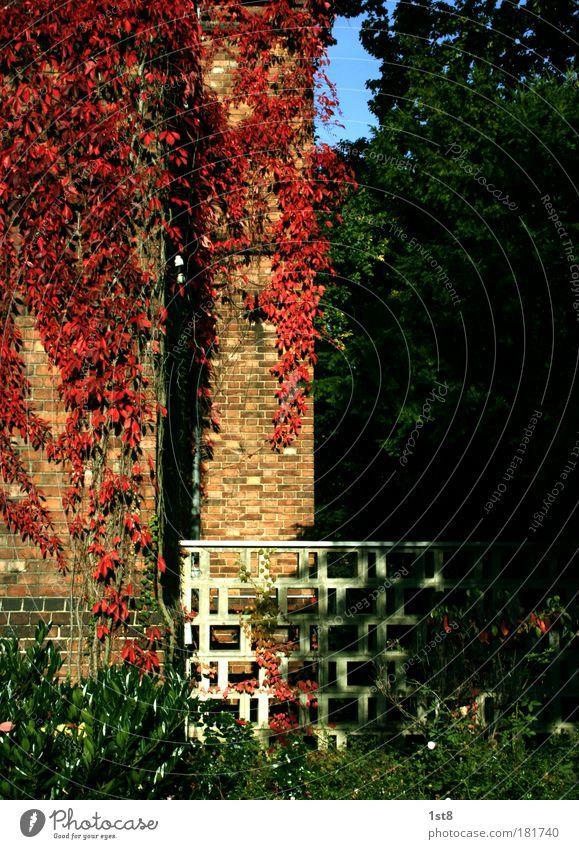 Rotwein weiß grün schön Pflanze rot schwarz Haus Herbst Wand Architektur Gebäude Mauer Park braun Deutschland Fassade
