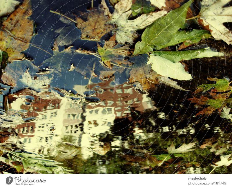 12.10.2009 Berlin: Regenallergie Farbfoto mehrfarbig Außenaufnahme Experiment abstrakt Muster Strukturen & Formen Tag Reflexion & Spiegelung Umwelt Natur