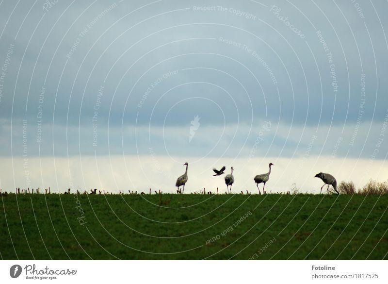 Vier + eins Himmel Natur Pflanze grün Wolken Tier Umwelt natürlich Gras grau fliegen Vogel frei Feld Wildtier ästhetisch
