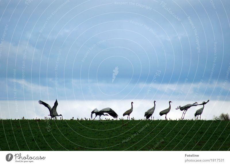 Starterlaubnis erteilt Himmel Natur Pflanze grün Wolken Tier Umwelt natürlich Gras grau fliegen Vogel frei Feld Wildtier ästhetisch