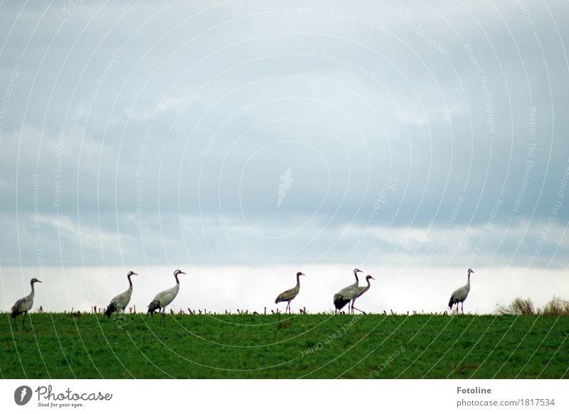 Demonstration Umwelt Natur Landschaft Pflanze Tier Himmel Wolken Horizont Herbst Gras Feld Wildtier Vogel Tiergruppe Schwarm ästhetisch Ferne frei groß