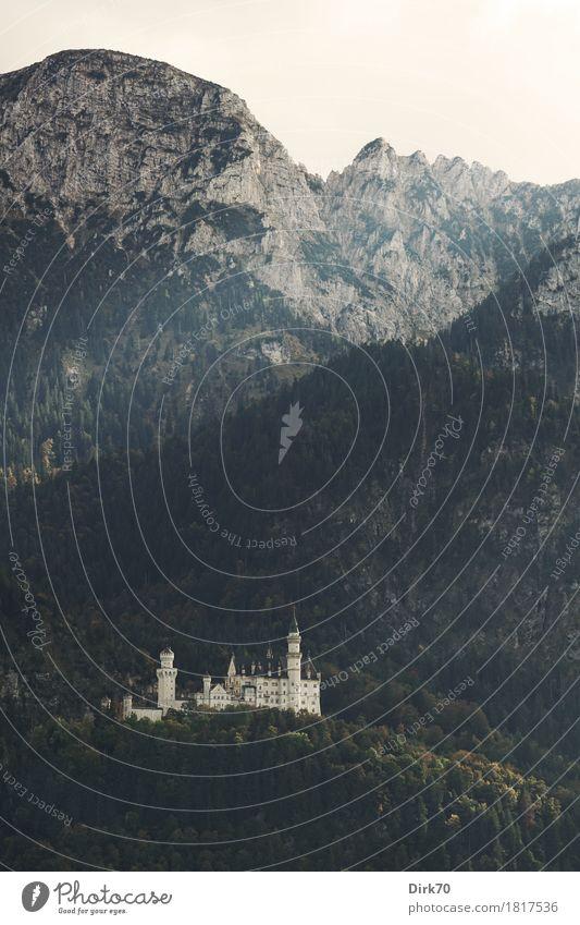 Neuschwanstein herbstlich, Hochformat Ferien & Urlaub & Reisen Tourismus Sightseeing Landschaft Herbst Baum Wald Herbstwald Hügel Felsen Alpen Berge u. Gebirge