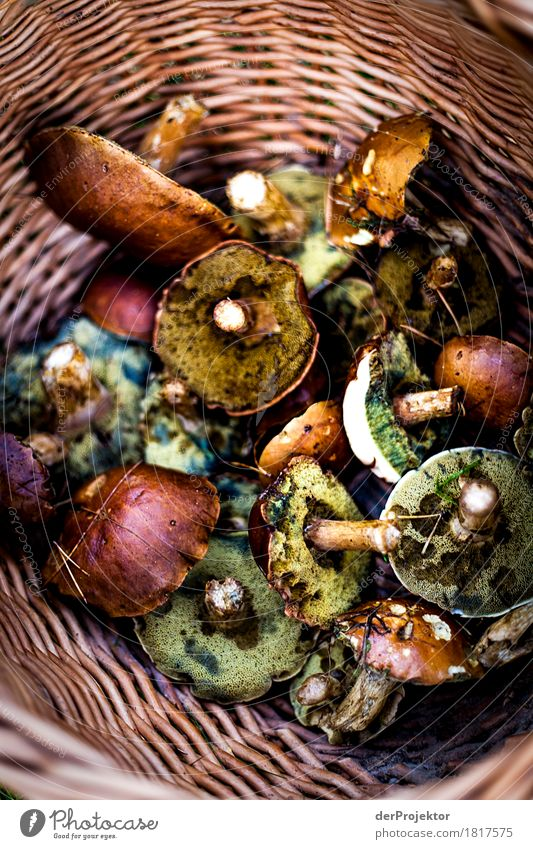 Und die sind alle essbar? kaufen Ausflug Umwelt Natur Pflanze Wildpflanze Wald Urwald außergewöhnlich bedrohlich Bekanntheit Gefühle Pilz Pilzsucher vergiften