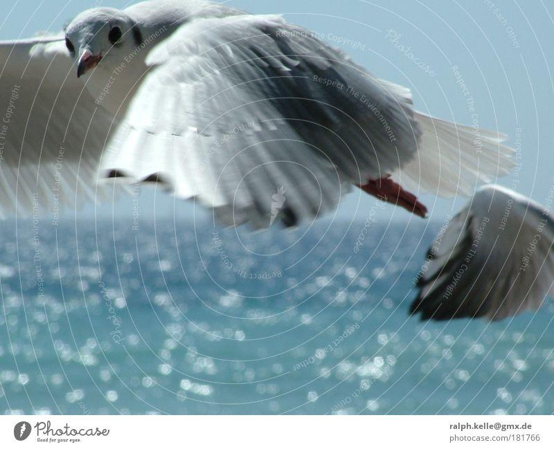 Möve blau Tier Vogel fliegen natürlich Wildtier