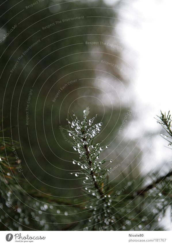 Natürlicher Baumschmuck Farbfoto Außenaufnahme Menschenleer Textfreiraum oben Tag Schwache Tiefenschärfe Umwelt Natur Pflanze Wassertropfen Wolken Herbst Regen