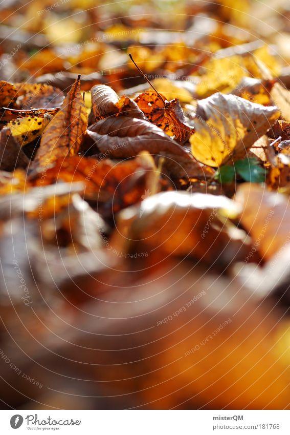 Herbstgeraschel. Natur Blatt Park braun Wetter Boden Spaziergang Fußweg Jahreszeiten Makroaufnahme Herbstlaub Heimat Geborgenheit Friedhof herbstlich