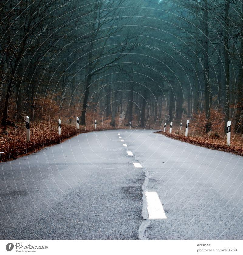 Noch 23 Kurven Natur Baum Pflanze Blatt Straße Wald Herbst Landschaft fahren Autofahren Verkehrsschild schlechtes Wetter Verkehrszeichen