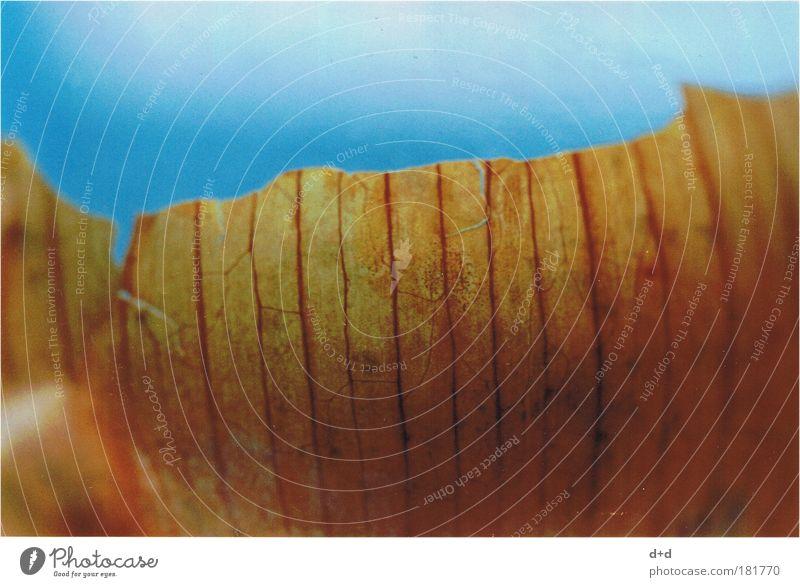 ((|)) blau Ernährung braun Lebensmittel Müll Kräuter & Gewürze Gemüse Bioprodukte Gefäße Rest Hülle Faser Zwiebel häuten Schalotten Zwiebelschale