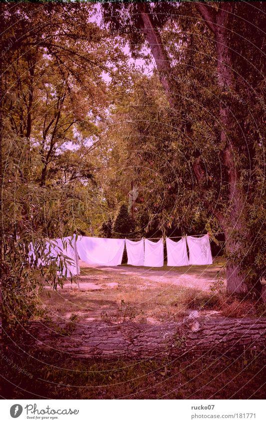 Biowäsche Farbfoto Außenaufnahme Tag Licht Zentralperspektive Ferien & Urlaub & Reisen Camping Sommer Sommerurlaub Baum Stadtrand Erholung Häusliches Leben