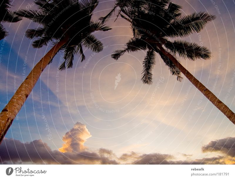2 Palmen Farbfoto Außenaufnahme Textfreiraum Mitte Abend Dämmerung Schatten Kontrast Lichterscheinung Sonnenaufgang Sonnenuntergang Froschperspektive Weitwinkel