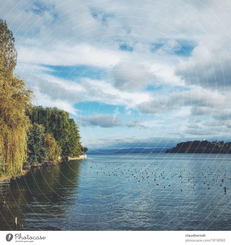 Herbstnachmittag Umwelt Natur Landschaft Pflanze Tier Wasser Schönes Wetter Baum Weide Seeufer Insel Insel Mainau Bodensee Vogel Entenvögel Möwenvögel
