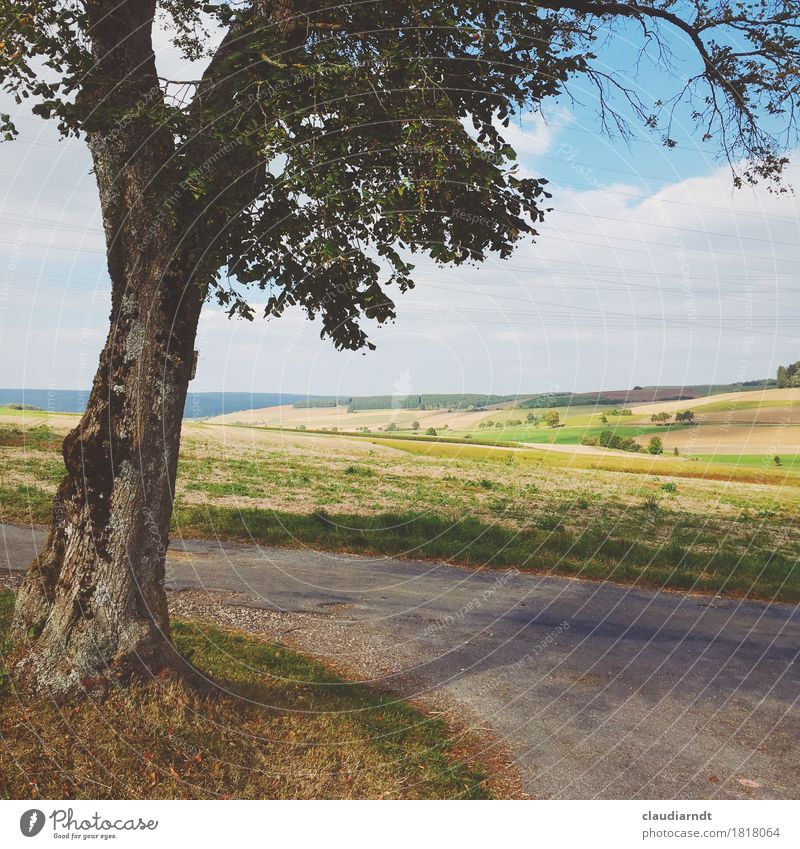 Spazierweg Himmel Natur Pflanze Sommer schön Baum Landschaft Wolken Umwelt Wege & Pfade Herbst Deutschland frei Feld Idylle einzeln