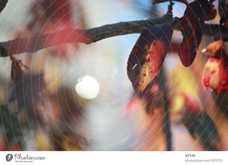 Herbst Natur Baum rot Pflanze Farbe Blatt ruhig Erholung Umwelt Stimmung natürlich ästhetisch Warmherzigkeit Vorsicht Grünpflanze