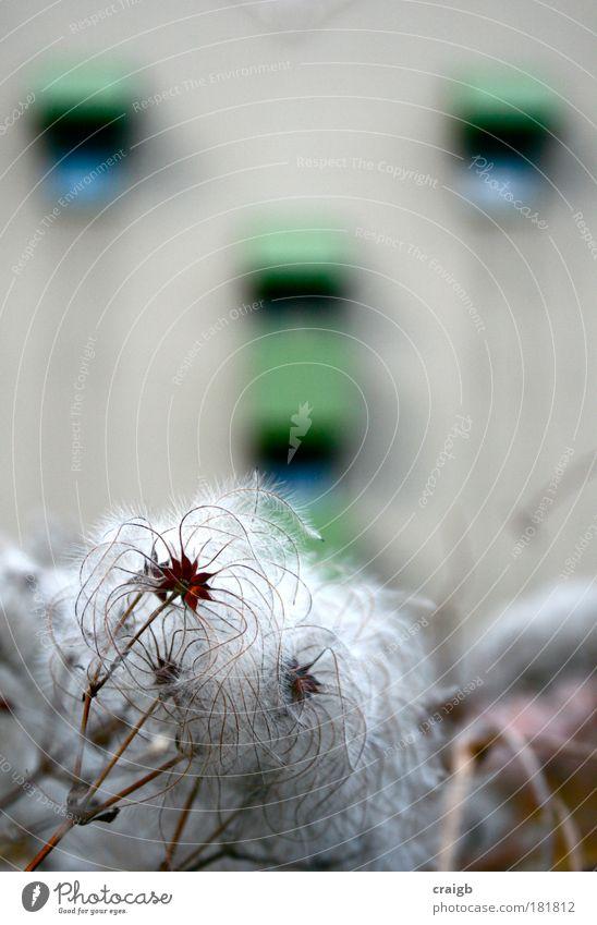 Blasen Farbfoto Gedeckte Farben Außenaufnahme Nahaufnahme Strukturen & Formen Menschenleer Tag Schwache Tiefenschärfe Zentralperspektive Umwelt Natur Pflanze