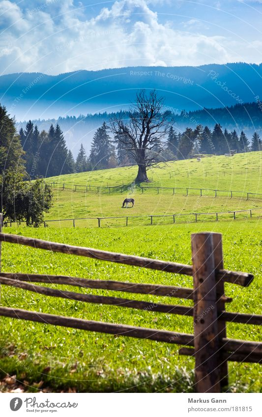 Pferdekoppel Natur Baum grün Wolken Einsamkeit Tier Ferne Farbe Wald Herbst Wiese Berge u. Gebirge Nebel Kuh genießen