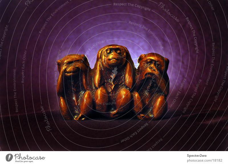 Don't See, Hear, Speak Affen Symbole & Metaphern Sinnesorgane sprechen hören Tier obskur Blick