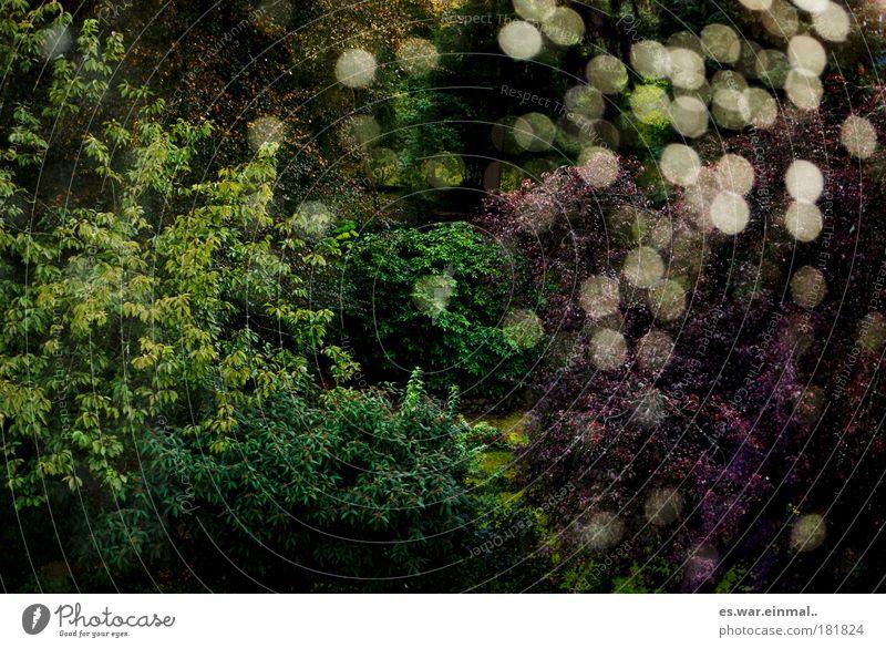 herbst. Natur Wasser grün Baum Pflanze Sommer Wald Erholung Herbst Landschaft Garten Umwelt Glück Park Zufriedenheit glänzend