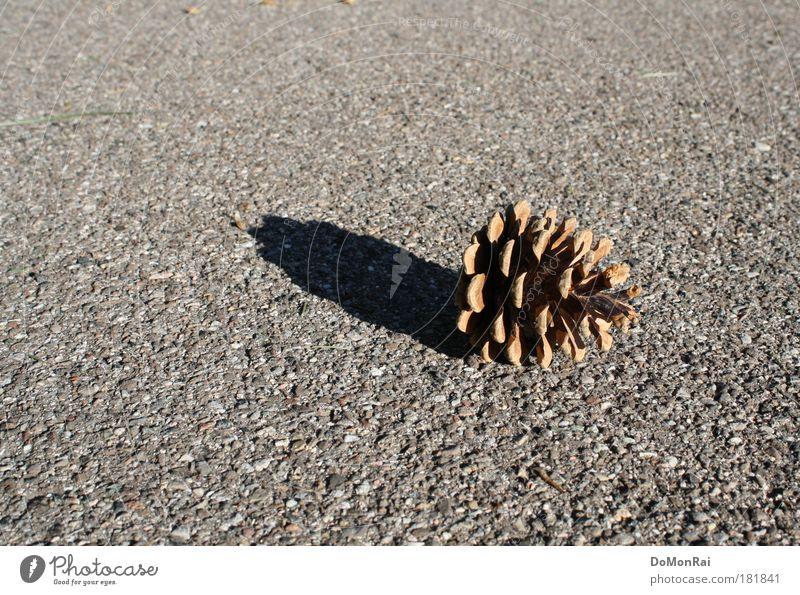 Waldboden Natur Pflanze schwarz Einsamkeit Straße grau Wege & Pfade Wärme Umwelt trist einfach liegen Kultur Asphalt Vergänglichkeit natürlich
