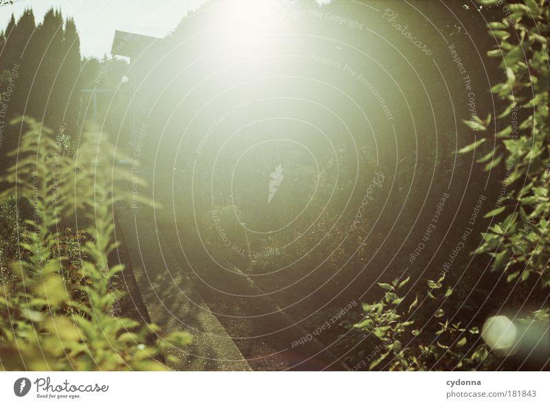 Gegenlicht Natur schön ruhig Leben Erholung Garten träumen Wege & Pfade Wärme Stimmung Kraft Umwelt einzigartig Idylle Sonnenaufgang